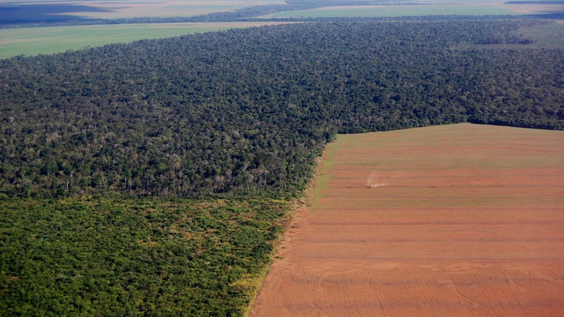 От говеждо до шоколад - незаконно обезлесяване стои зад много от храните