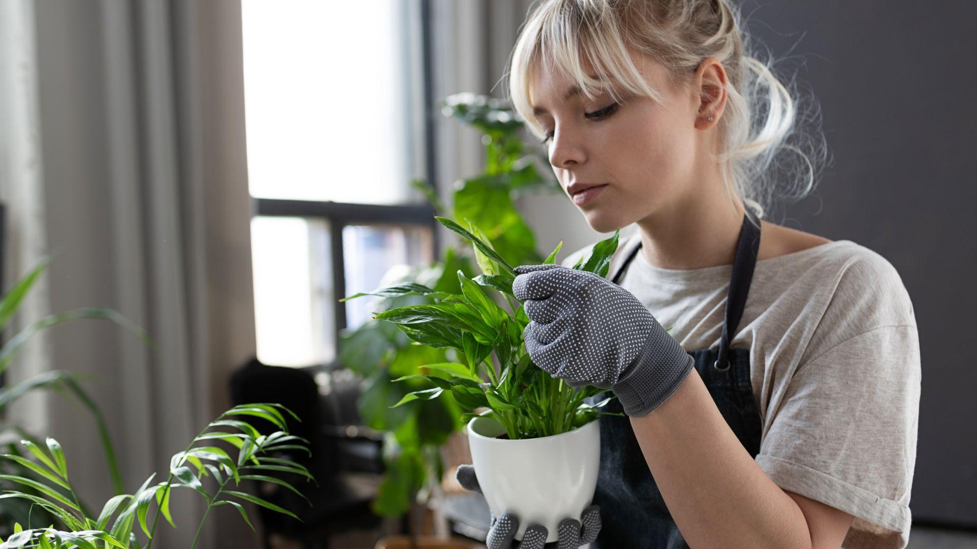 Бъди като Джулия Робъртс и Опра Уинфри: Светът полудя по мини умна градина с билки и зеленчуци у дома
