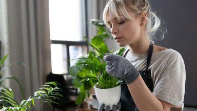 Светът полудя по мини умна градина с билки и зеленчуци у дома