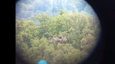 Излюпи се първият черен лешояд в България от 28 години насам (видео)