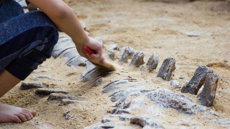 Палеонтолози от австралийския природонаучен музей в град Ероманга откриха останки