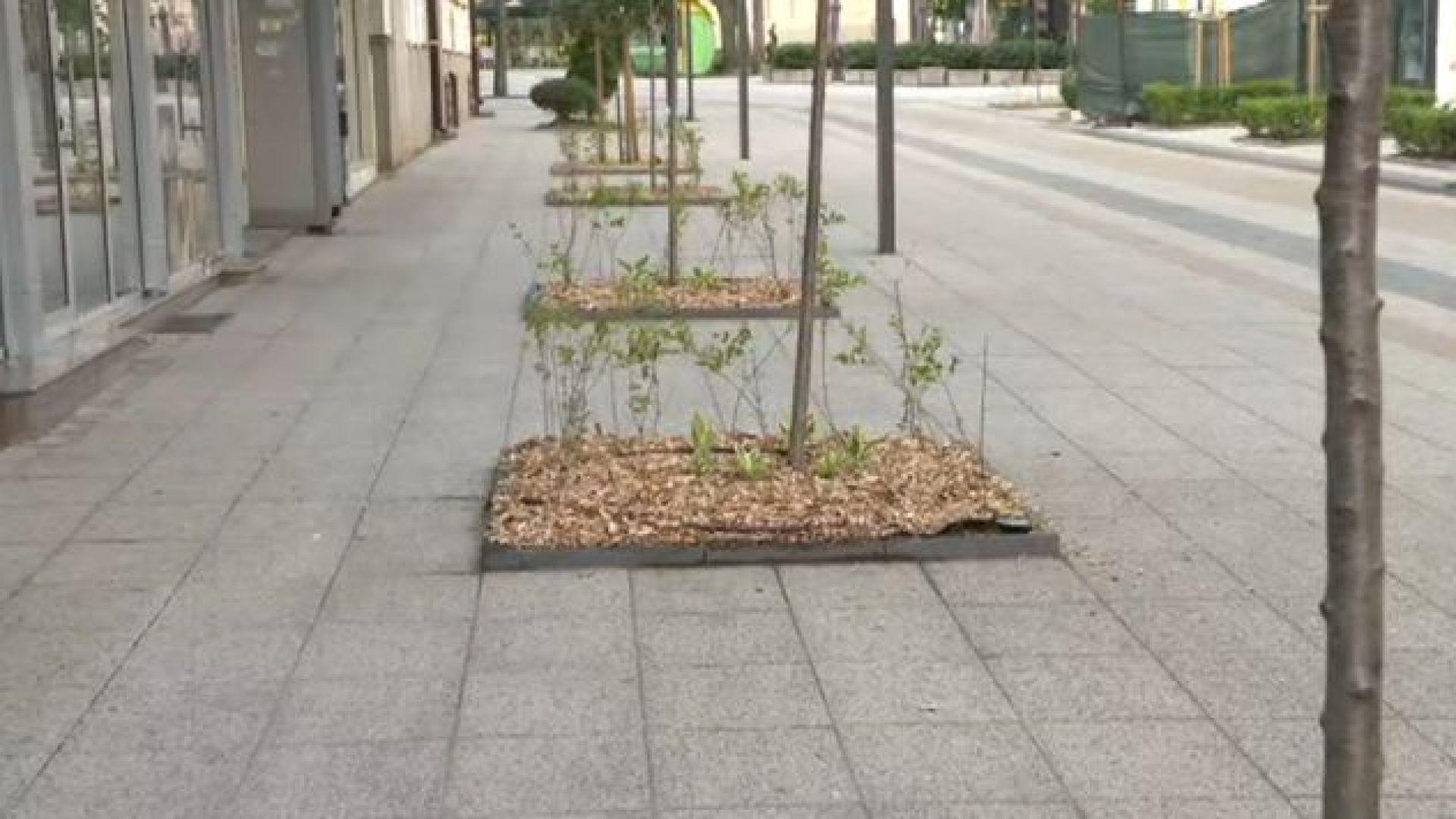 Протест в защита на дърветата във Враца заради сеч в центъра на града