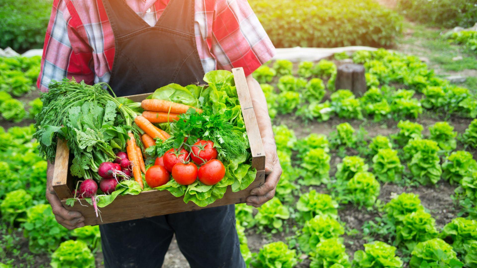 Клиентите на BILLA България пестят средства с любимите сезонни плодове и зеленчуци с марка BILLA Градини
