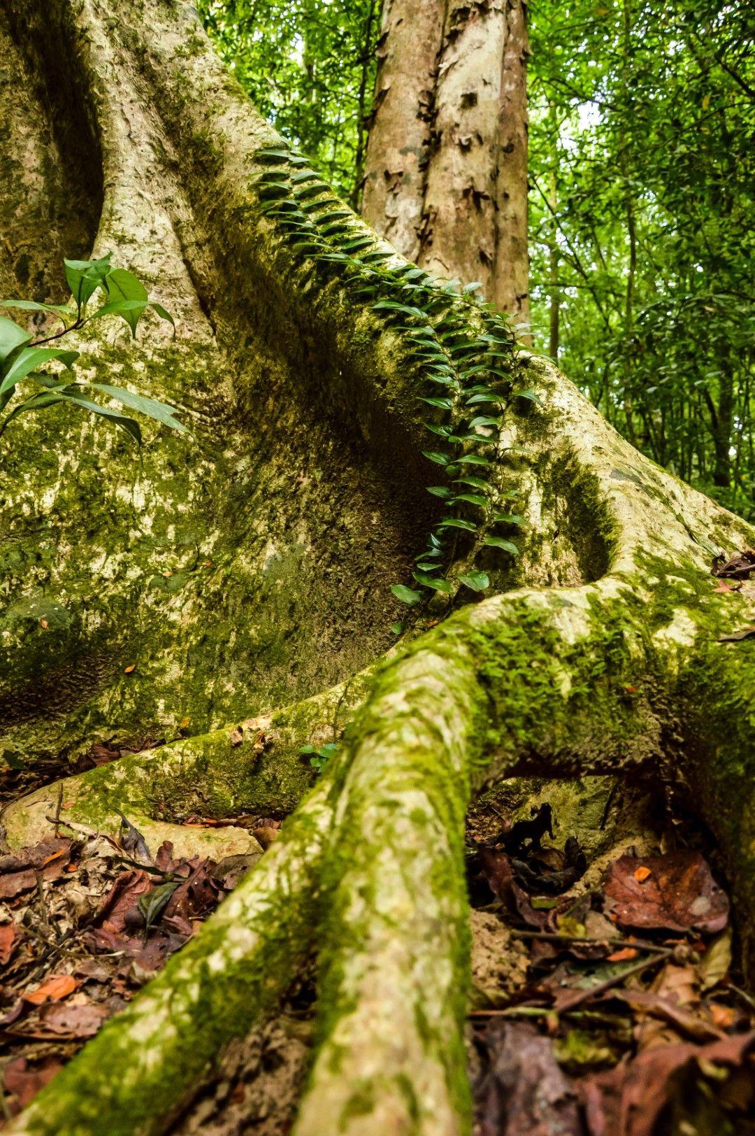 Джунглата по пътя към рафлезиите