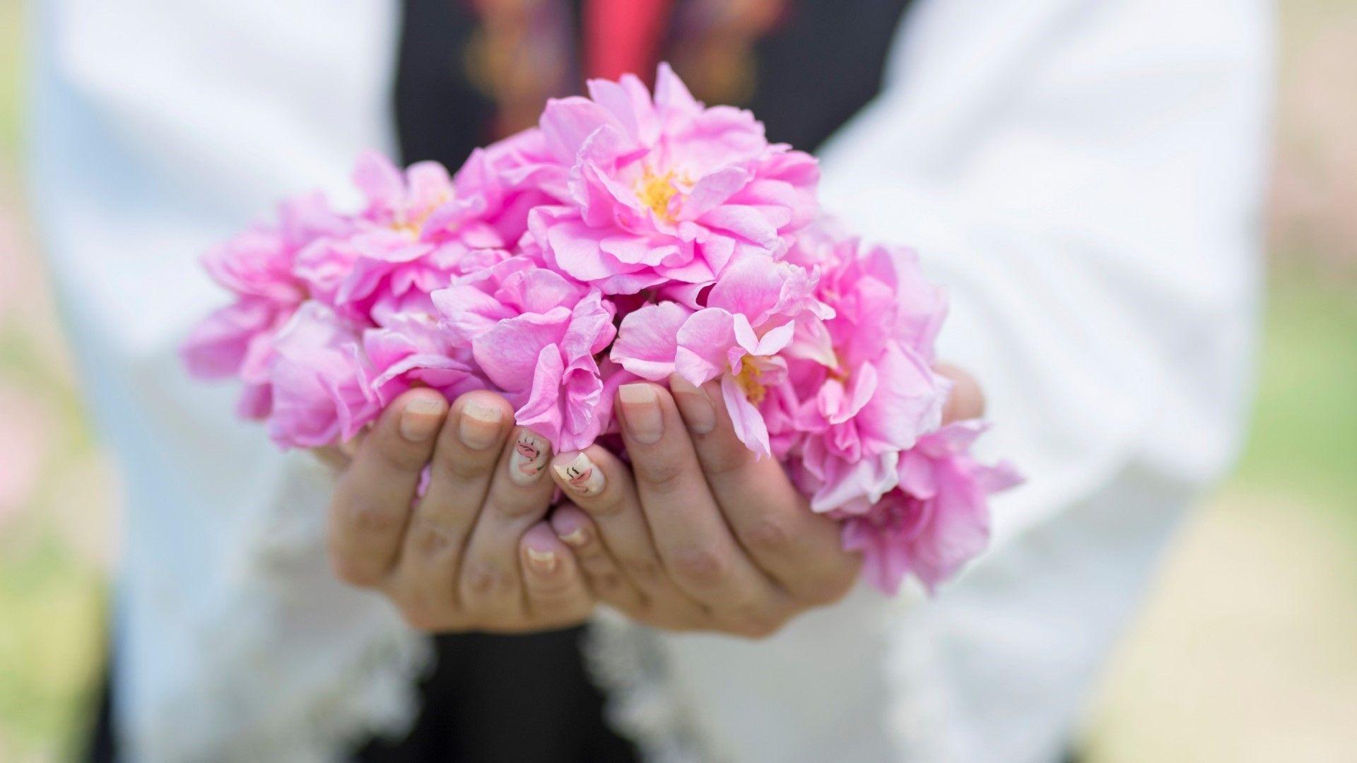 Ухание на лято: Кога и къде има празници на розата в Розовата долина