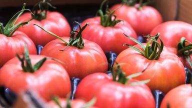 Розовият домат: Символ на България в 24 страни