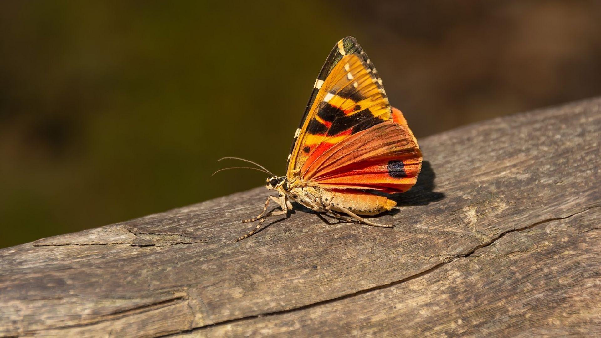Гърция: Вижте долината със стотици хиляди пеперуди (снимки)