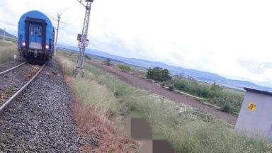 Пастирът на блъснатите от влак 22 крави глобяван многократно, оставял ги без надзор
