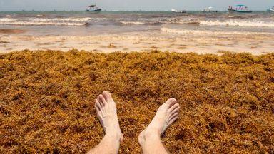 Тонове водорасли задръстиха райските плажове на Мексико (видео)