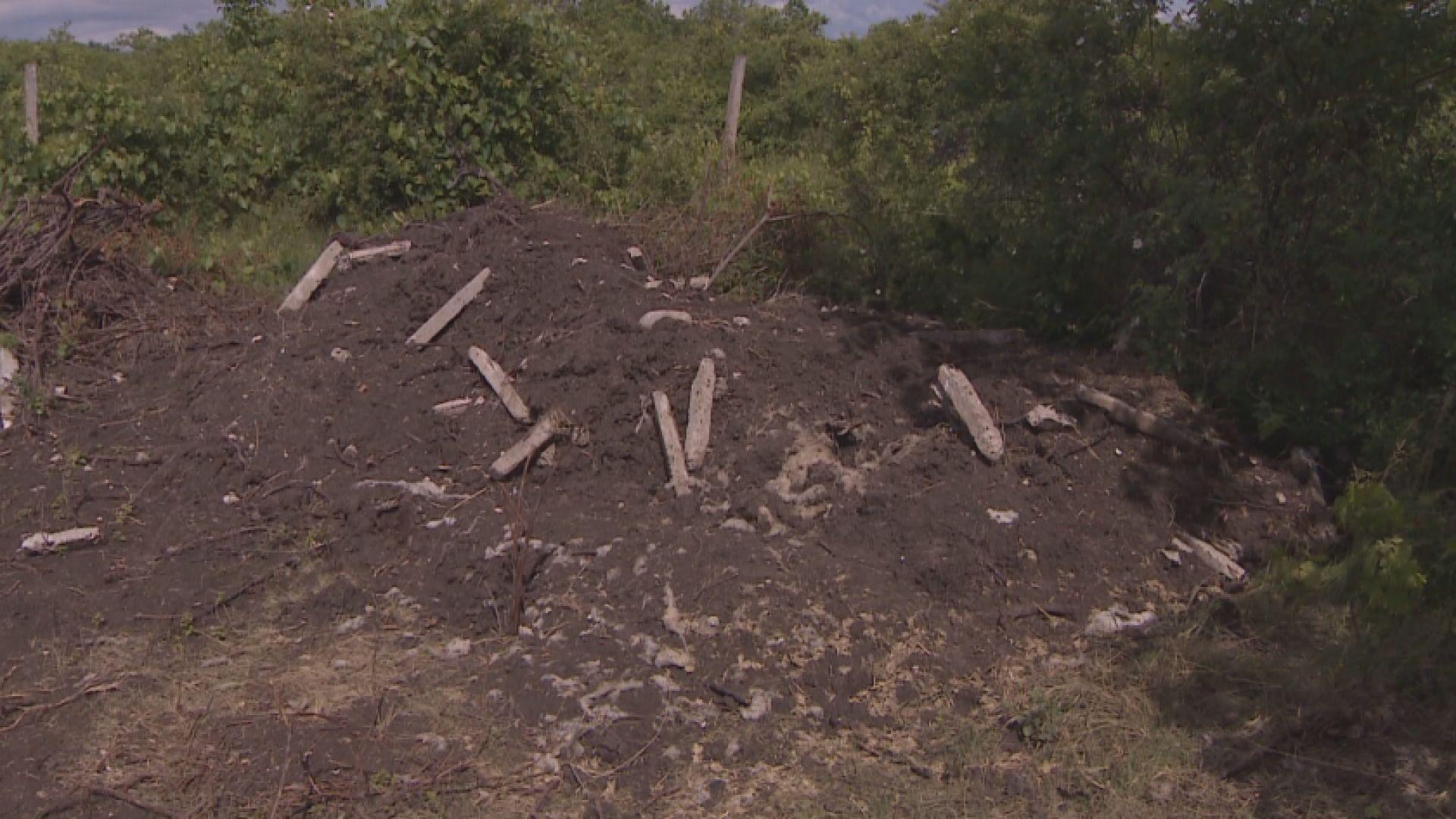 Загробили тайно десетки животни край пловдивското село Марково