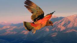 Редки новозеландски птици  вероятно са избягали високо  в планините от хората