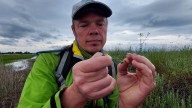 Френски експерти изследват водно конче в Поморийското езеро (снимки)