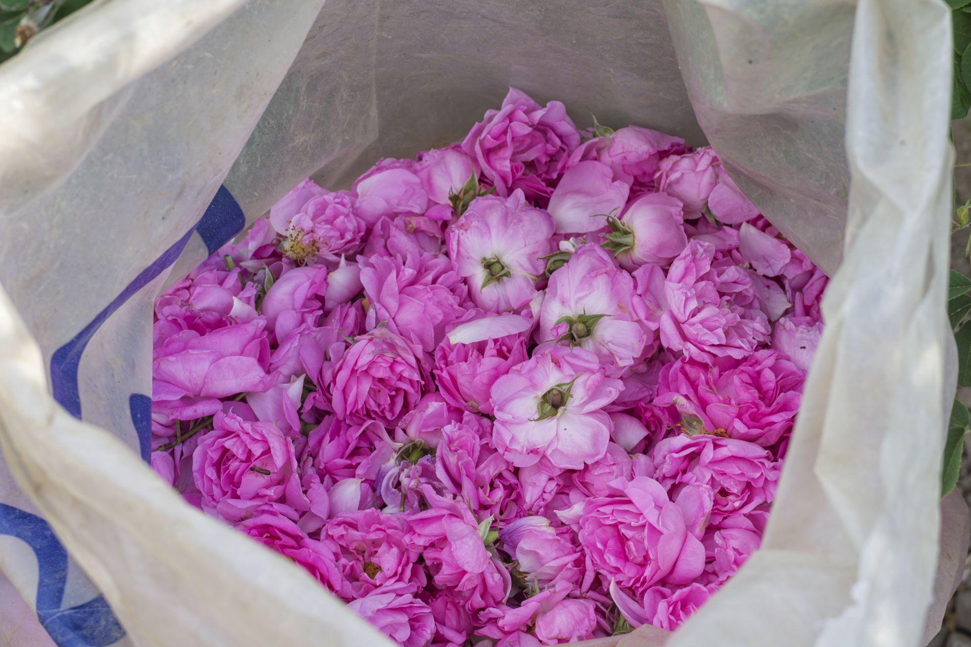 Набрани розови цветове
