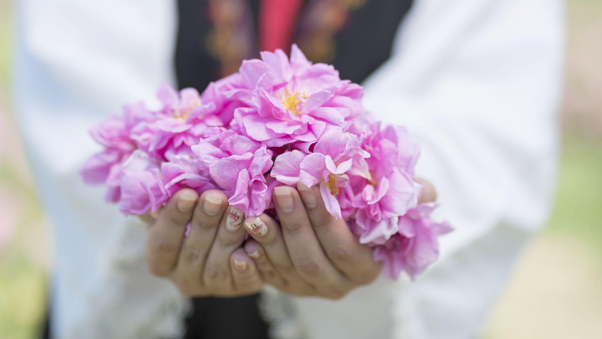 Розопроизводителите ще получат 2 млн. лева като антикризисна мярка