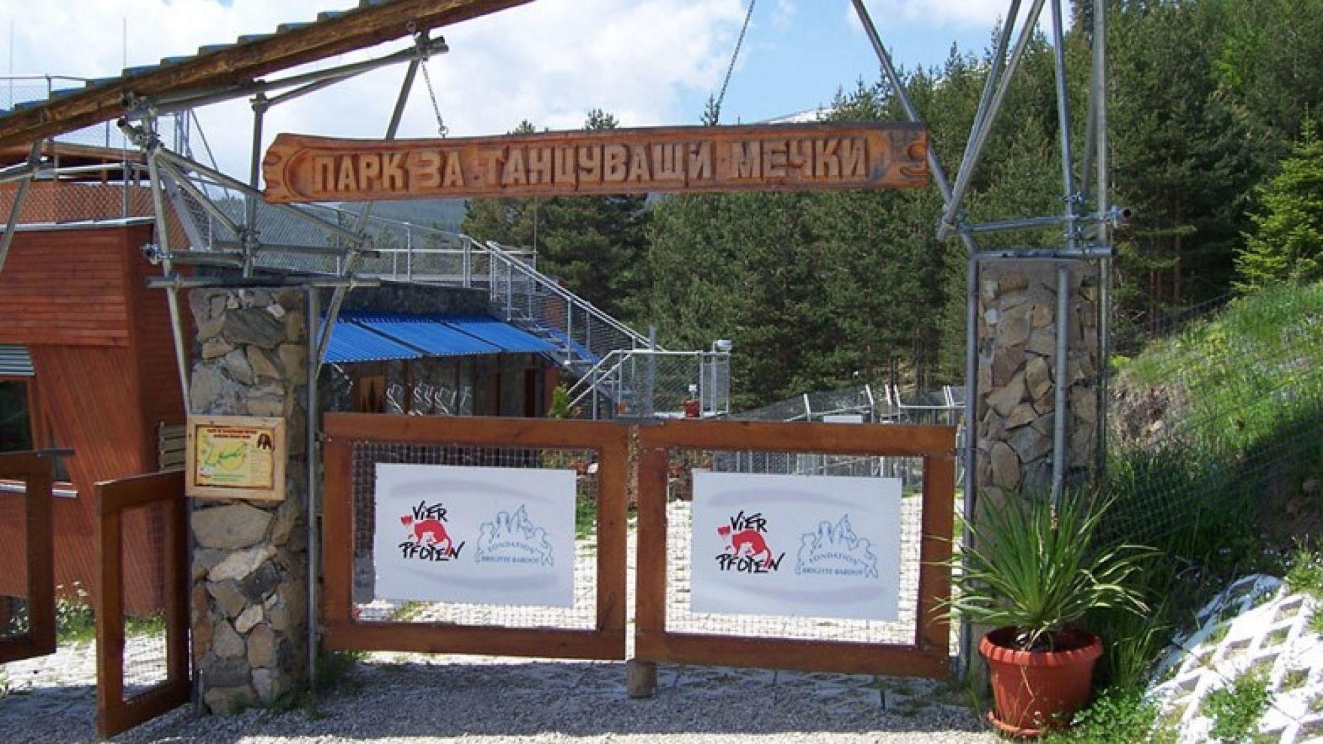 Спасеното мече в Родопите е на 4 месеца, вече е в Парка на танцуващите мечки