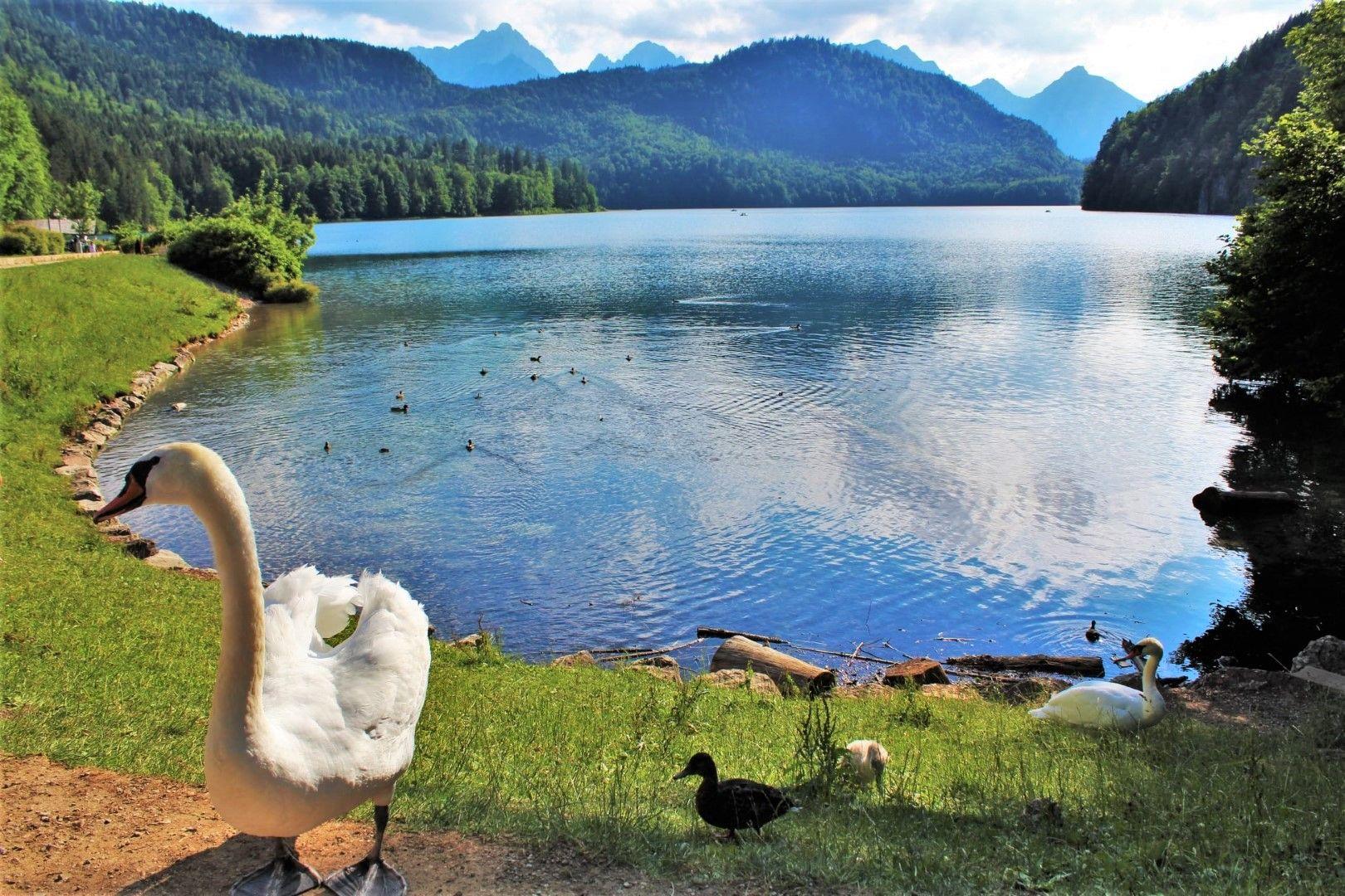 Алпзее, в подножието на Нойшванщайн, едно от шестте езера в района