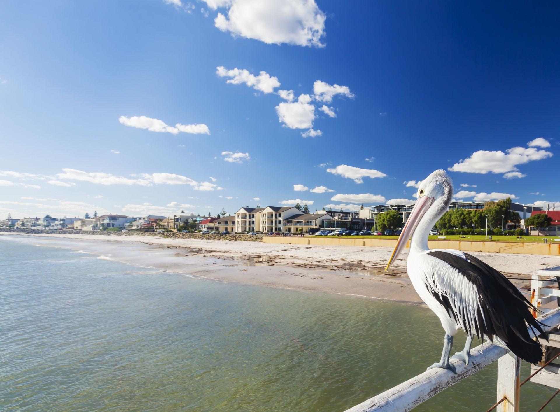 Аделейд (Австралия)