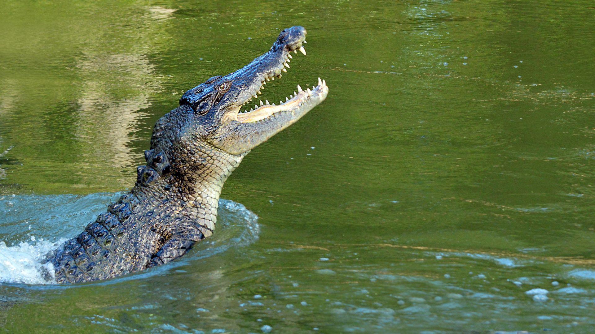 След жестока схватка с крокодил в Мексико: Близначки са в болница, едната е в кома (снимки)