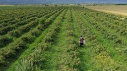 Земеделци ще получат 100 млн. лева отстъпка от акциза на горивата