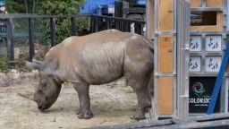 Женски бял носорог пристигна от Тайван в Япония в търсене на любов (видео)