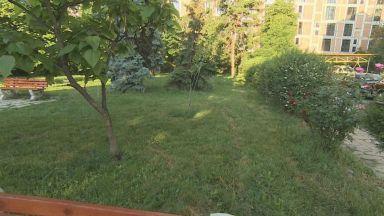 "Глобиха доброволци, окосили и засадили цветя пред община ""Красно село"""