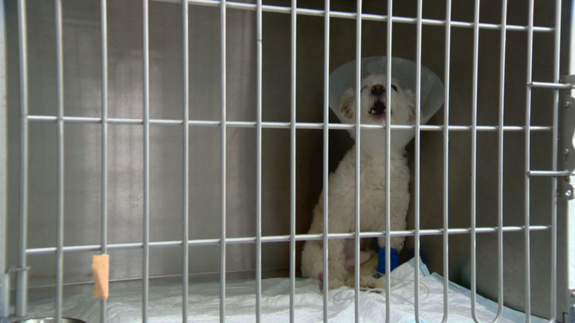 Разследват случая с хвърленото от 6-ия етаж куче в София