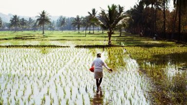 Циклонът Гулаб унищожи реколтата в Индия дни преди тя да бъде прибрана