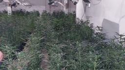 Разбиха наркооранжерия с близо 1000 растения в строяща се сграда в столичен квартал