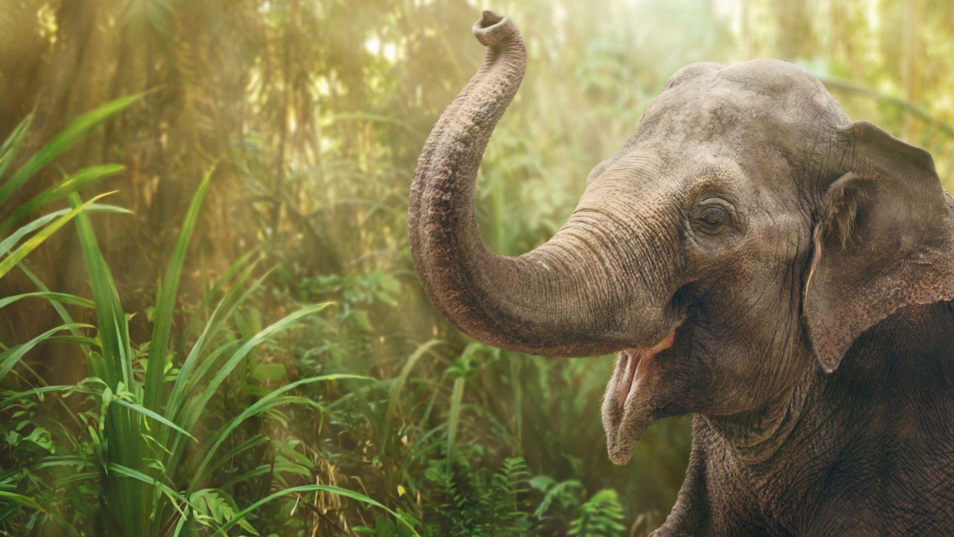 Слон тършува в кухнята на семейство в Тайланд (видео)