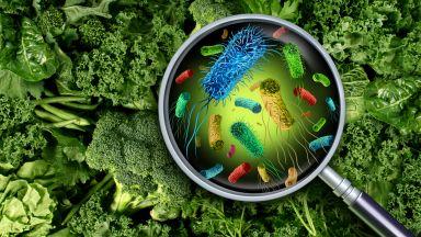 Микробите и слънцето могат да произведат 10 пъти повече храна от растенията