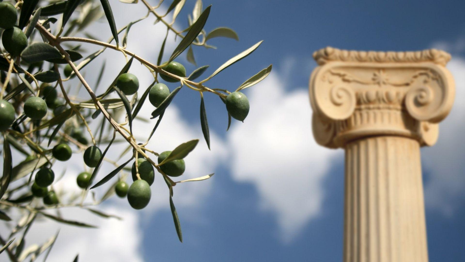 Невероятната история на свещеното маслиново дърво на Акропола