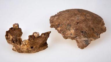 Непознат вид древен човек беше идентифициран в Израел