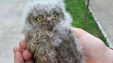 В Пловдив спасиха 8 бедстващи птици (снимки)