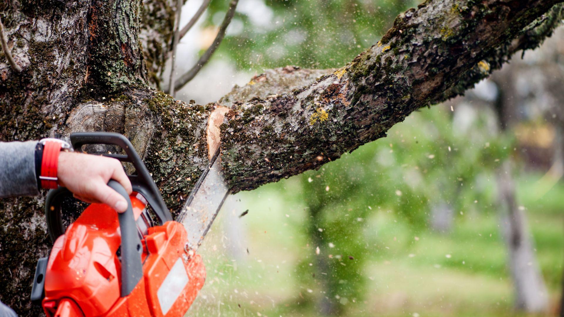 Софийската дирекция по горите установи незаконен сеч на 700 дървета край Своге
