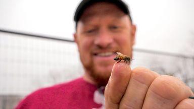 В царството на пчелите с Чарли Ейгар