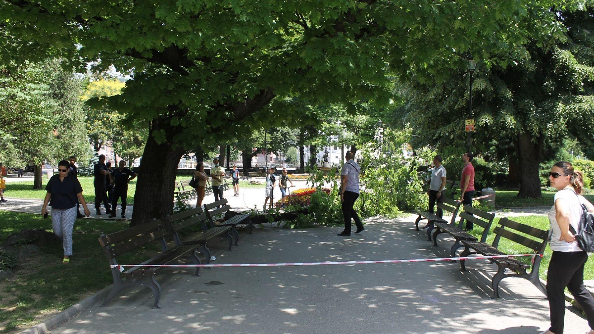 Фатална снимка под дърво: Рухна клон по време училищно тържество, учителка е ранена