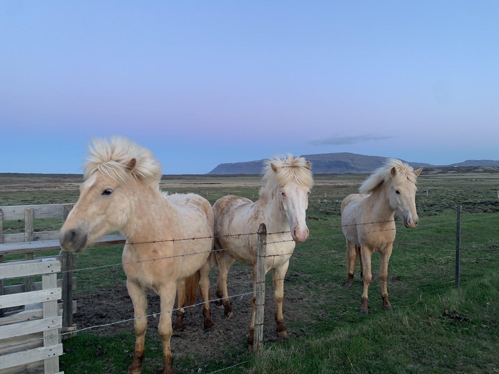 Кончета в Исландия