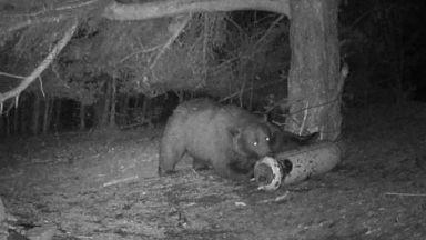 Бебето на нахапаната от мечка жена било в цедилка на гърба й при атаката (снимки)