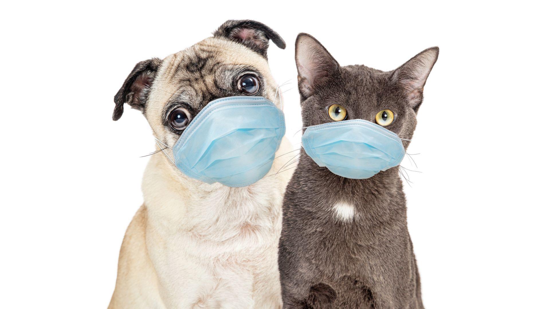Как се промениха домашните любимци през пандемията