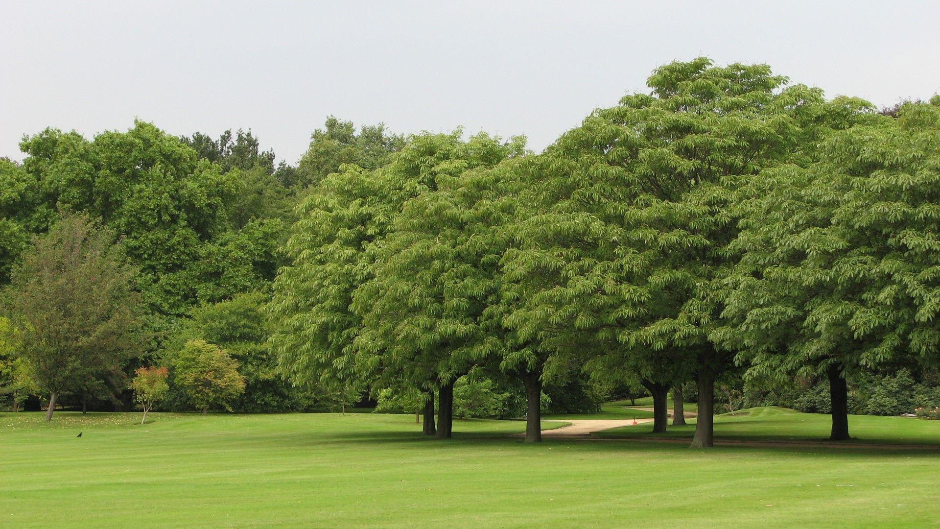 Перфектните морави в градините на Бъкингамския дворец са отворени за пикник това лято