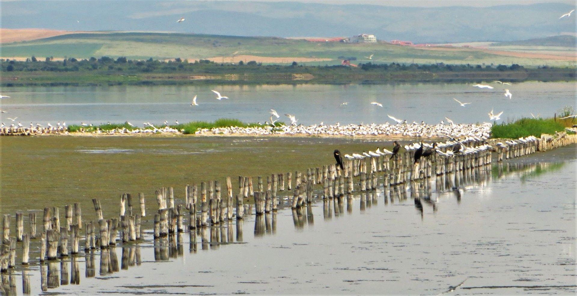 Птици в Поморийското езеро