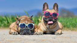 Как да помогнем на животните в горещите летни дни