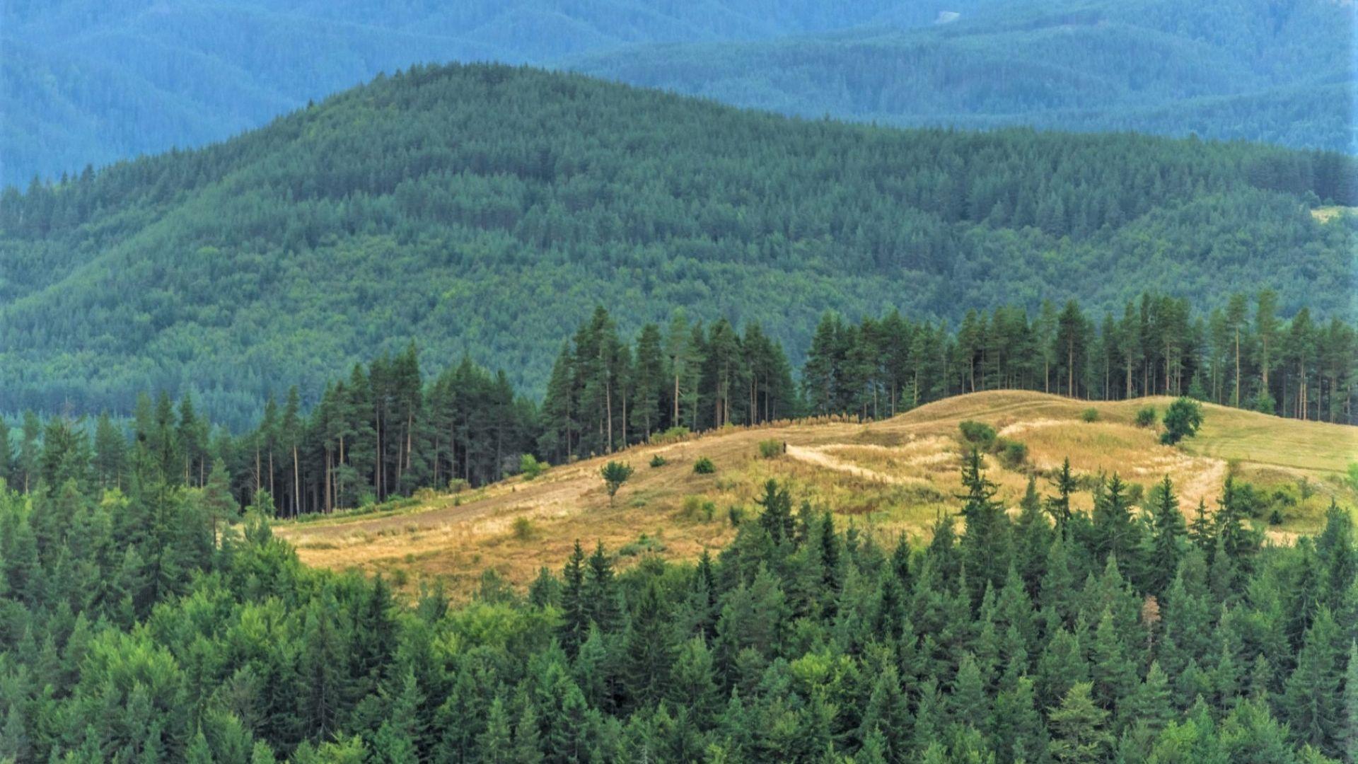 Пашови скали: една от най-красивите родопски гледки