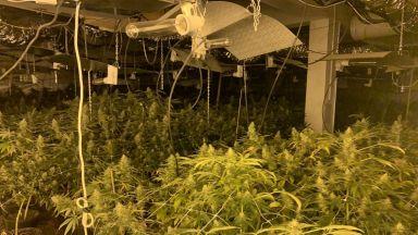 Разкриха високотехнологична оранжерия за марихуана в Бяла
