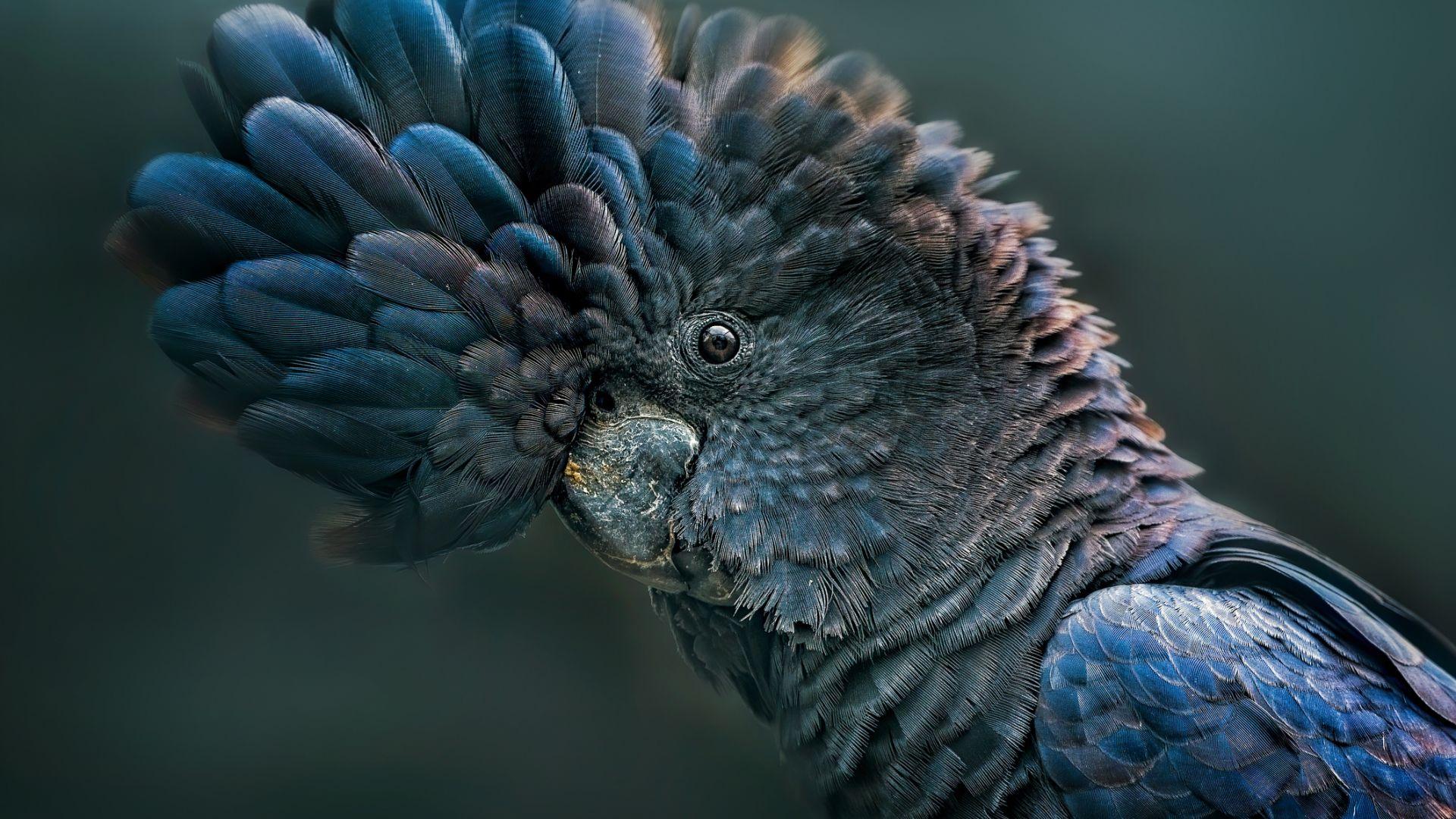 Птиците какаду се учат като хората