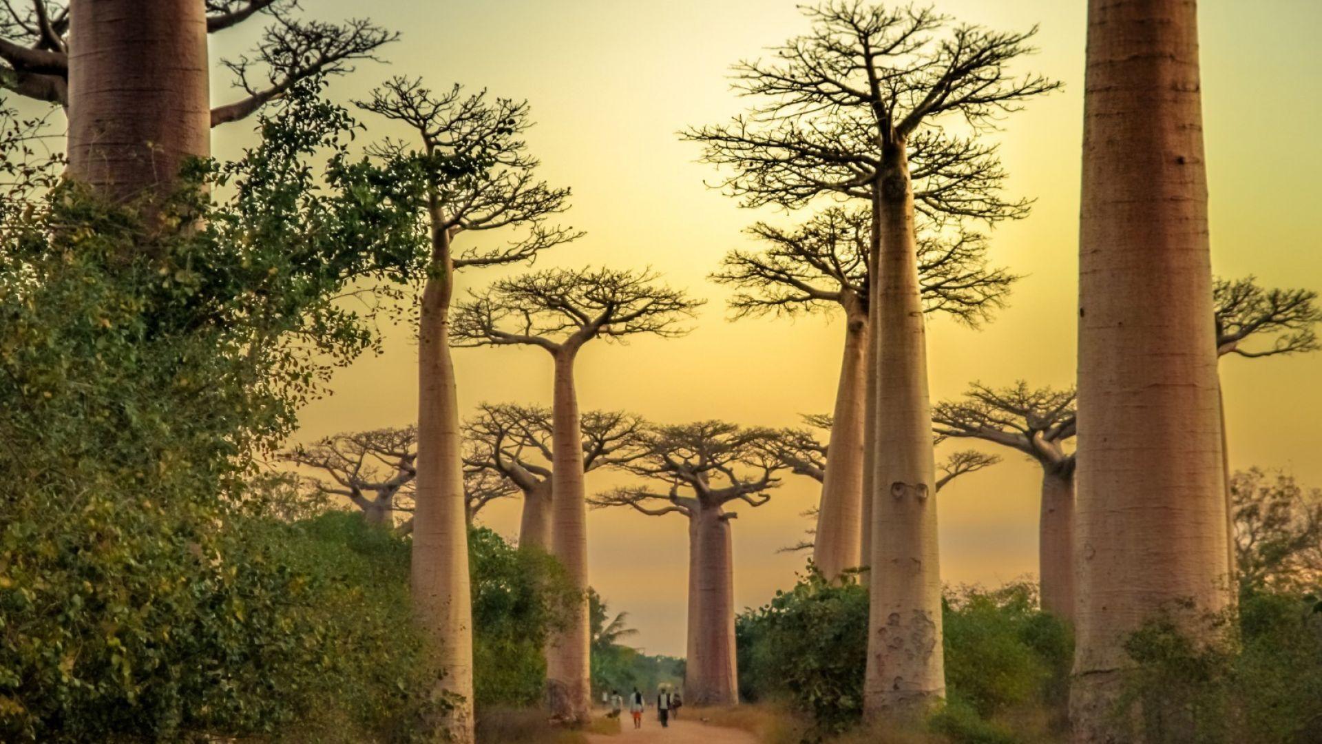 Фото гид: 10 уникални преживявания на остров Мадагаскар