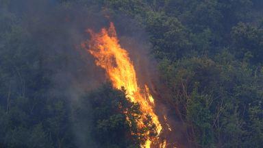Пожар пламна в близост до газопровода в Благоевград
