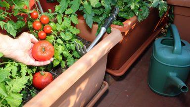 Лесни съвети за отглеждане на зеленчукова градина в градски условия
