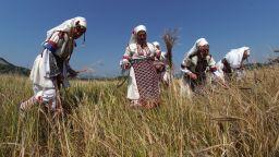 Юбилеен фестивал на лимеца - древното жито на траките (снимки)