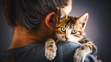 Хората си приличат повече с котките, отколкото с кучетата